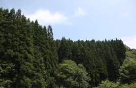 材料は地元木曽産のさわら、檜などを使用し、信州木曽の自社工場で生産