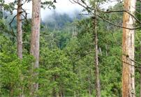 木材による二酸化炭素の固定