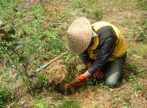 環境活動檜の植林木を間伐した斜面に30センチほど掘り下げ、椹(さわら)の苗を植えました。