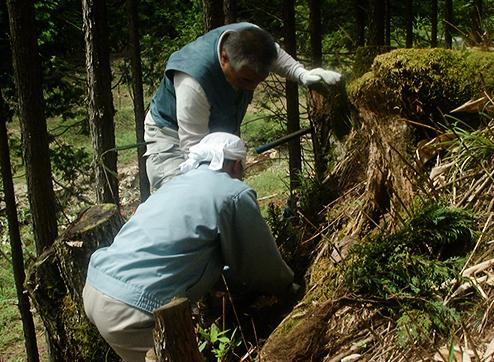 植樹は1時間ほどの作業でしたが、丈夫に育って欲しいとの願いを込めて額に汗して働きました。