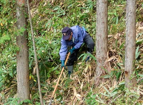 檜(ひのき)の植林木が立ち並ぶ中に来春苗を植えます。今回は、その植林場所の間伐、笹刈りを社員全員で汗を流しました。