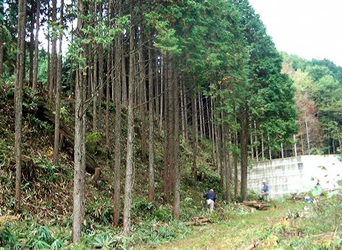 社員一同初心を忘れずに森林育成作業を継続していきたいと考えています。