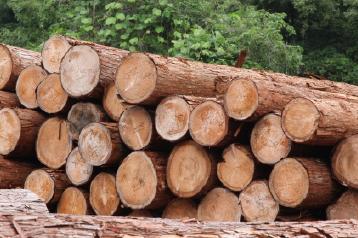 木曽の国有林から搬出されたさわらの丸太。信州 木曽のこの地は昔から良質な木材が産出されると名高い地域。おひつの材料となる、さわらも地元産を使用しています。昼夜の寒暖の差が激しく、冬は寒さが厳しいこの地域の気候条件のもとで育った木材は強度に優れています。