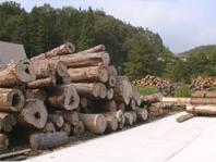 樹齢150年~300年にもなる貴重な天然木