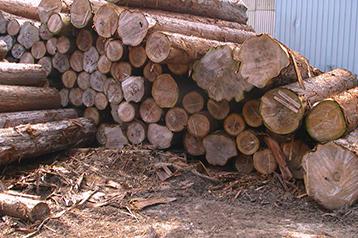 木曽谷から生産された、木曽檜、さわら、高野槙等の原木です。
