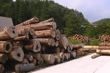 樹齢100年~300年にもなる貴重な木材です。