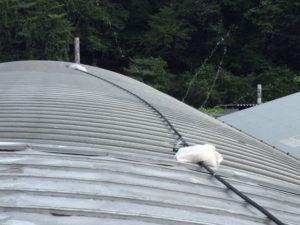 屋根にスプリンクラーで散水作戦!