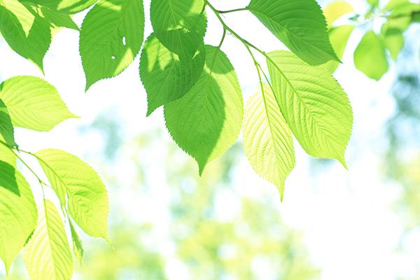 1.初夏の爽やかな風が感じられるようになる7月。